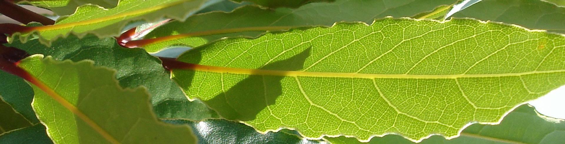 Studio della fotosintesi, analisi CO2, O2, C2H4, indice di maturazione - analisi etilene